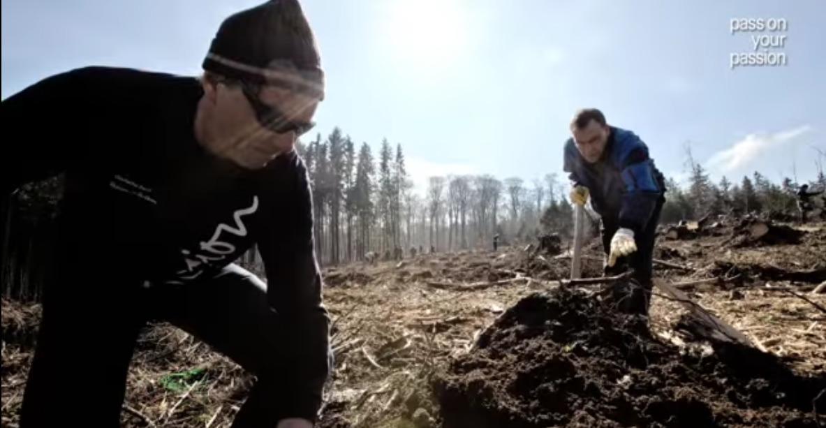 DB tree planting
